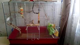 Клетка для попугаев. (Корелл,Волнистых,Певчих,Роззел...)