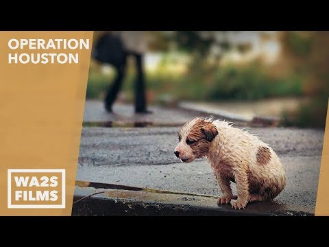 Forgotten Dogs Rescue Homeless Puppy in the Rain at Night - Howl & Hope For Dodo Dogs