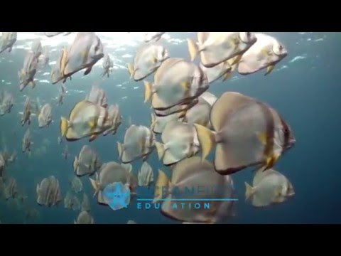 Marine Life Vertebrates with Ocean First Education