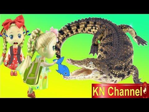 Đồ chơi trẻ em BÚP BÊ KN Channel CHO CÁ SẤU ĂN   THAM QUAN VIỆN HẢI DƯƠNG HỌC NHA TRANG
