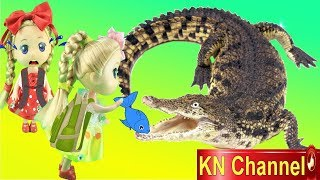 Đồ chơi trẻ em BÚP BÊ KN Channel CHO CÁ SẤU ĂN   THAM QUAN VIỆN HẢI DƯƠNG HỌC NHA TRANG thumbnail