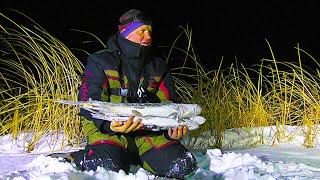 БРОСИЛИ НА ДВОЕ СУТОК В КАМЫШАХ ПОДАЛЬШЕ ОТ ЛЮДЕЙ Зимняя рыбалка на жерлицы