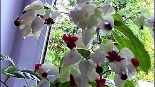 видео Цветы и декоративные растения