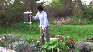 Planting Gladiolus