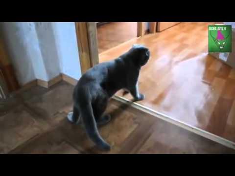 Кот пришел домой песня