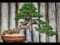 Fukinagashi – Bonsai Style #6