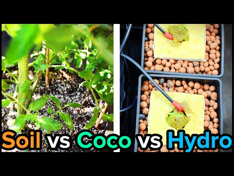 Video clip hay hydroponic vs soil experiment 6 weeks for Soil vs coco