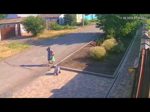 Ворующая кусты бабушка в Буденновске