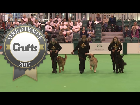 Obreedience Group Heelwork - Part 3 | Crufts 2017