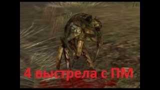Stalker Online-Новичок,нагибатор!