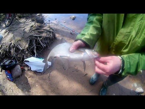 Рыбалка на Шипучке в Сестрорецке. Язь,лещ, плотва, елец 17.05.2017