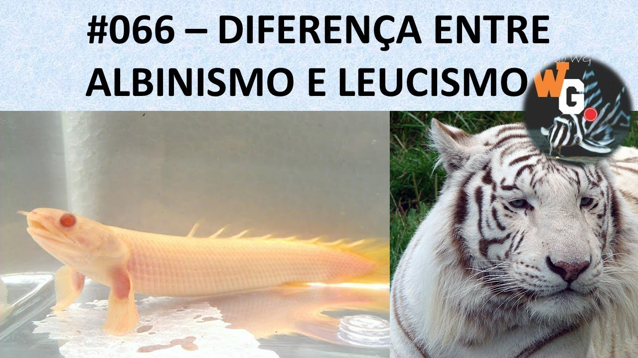 Diferença entre Albinismo e Leucismo - #066