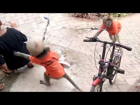 Naughty Bandar Bandriya Ka Khel - Funny Video | Comedy Video From My Phone thumbnail