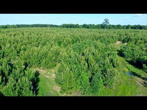 Franklin County Texas 67.6 Acre Pine Plantation For Sale