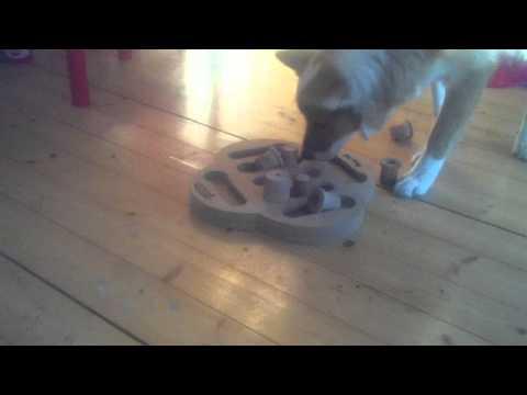 Bob spelar Dog Fighter (Nina Ottosson)