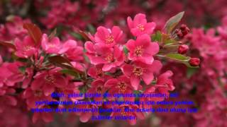 MÜMTEHİNE-(MÜMTEHINE)-SURESİ-Mishary Alafasi (Mishary Rashid Alafasy)