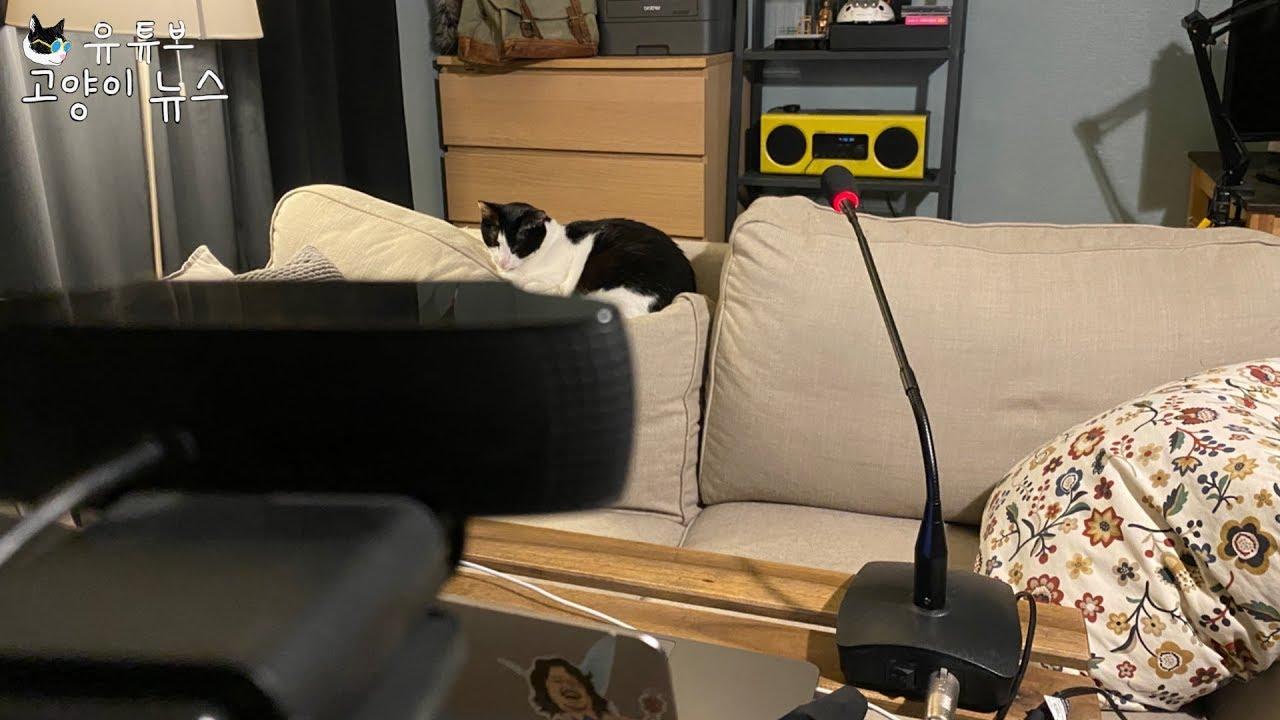 7월 고양이뉴스 생방송(오늘의 주제 : 졸리다, 유튜브 카테고리가 사라졌다)