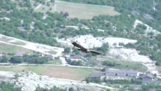 200 fps Белоголовый Сип Griffon Vulture with Skyline X-Team in Crimea