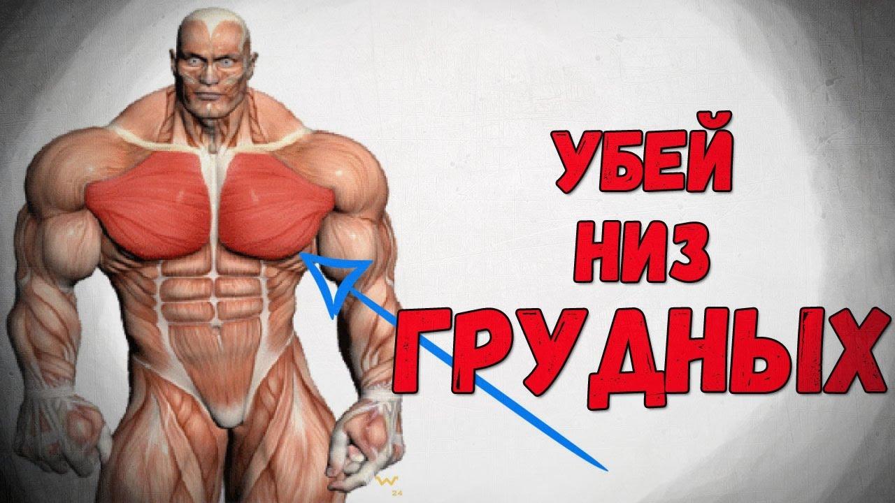 Как накачать нижнюю часть грудных мышц