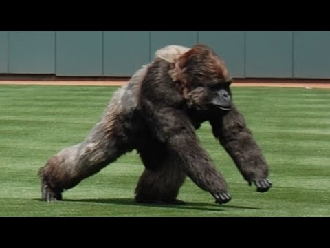 Craziest 'Animal Interference' Moments in Sports History