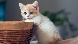 Почему у котенка глаза меняют цвет? Почему глаза котенка меняют цвет с одного на другой?