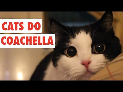 Cats Do Coachella | Funny Cat Video Compilation 2017