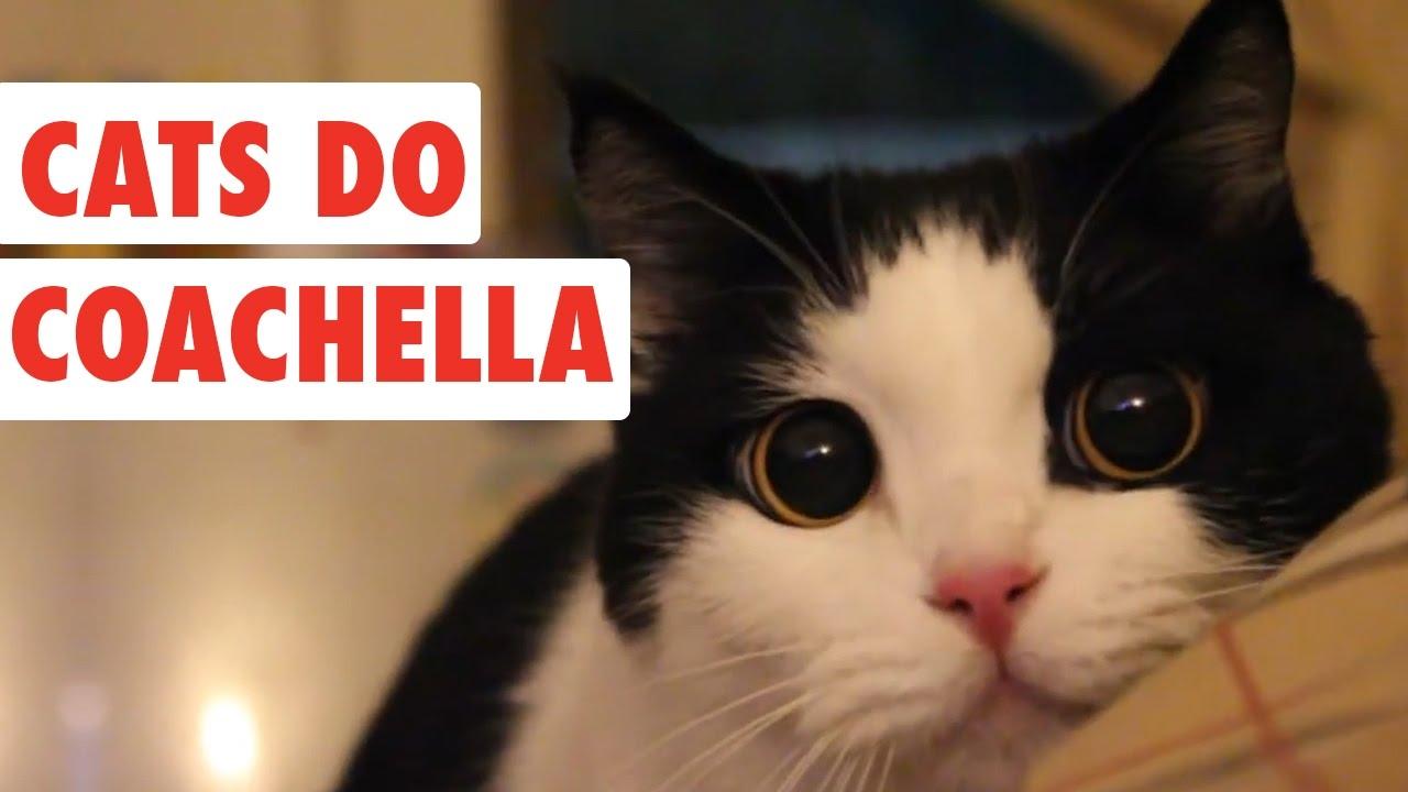 Cats Do Coachella | Funny Cat Video Compilation 2017