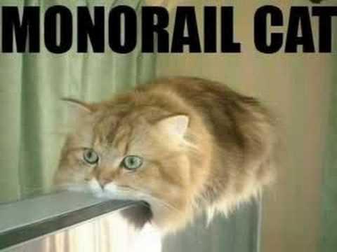 Stupid cat videos really short