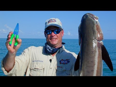 50 lb Monster Cobia caught offshore Florida Everglades fishing