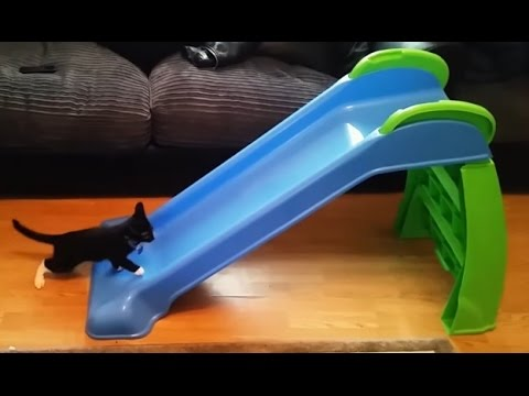 Kittens Playing on Slides Compilation