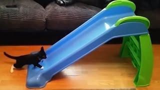 いつまでだって遊んじゃうよ!滑り台で遊ぶ猫たちの動画総集編(受験生注意)