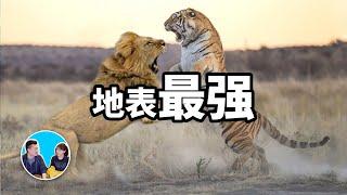 一對一單挑!陸地上的十大最强悍生物 | 老高與小茉 Mr & Mrs Gao