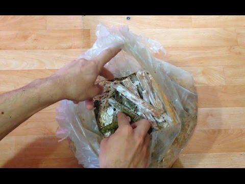 Как выращивать грибы в домашних условиях на пеньках?