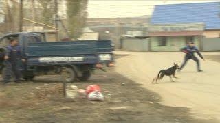 В Алматы  бродячие собаки загрызли ребенка (13.04.16)