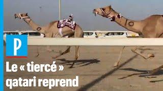 Coronavirus : Les courses de chameaux reprennent au Qatar