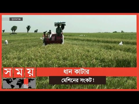 সুনামগঞ্জের হাওরে কৃষক ব্যস্ত ক্ষেতের ধানকাটা নিয়ে   Paddy Field   Business News   Somoy TV