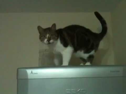 Cat walking down fridge then waving