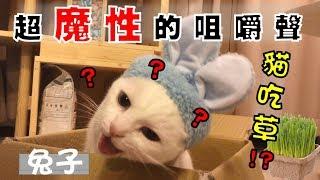 【豆漿 - SoybeanMilk】中秋節月兔現身? 超魔性的咀嚼聲洗腦!!