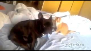 Добрый пес и Коварный Котенок
