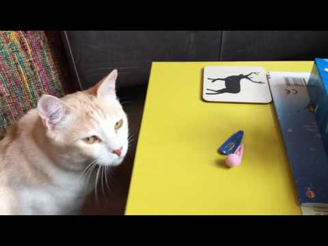 Cat knocking things over