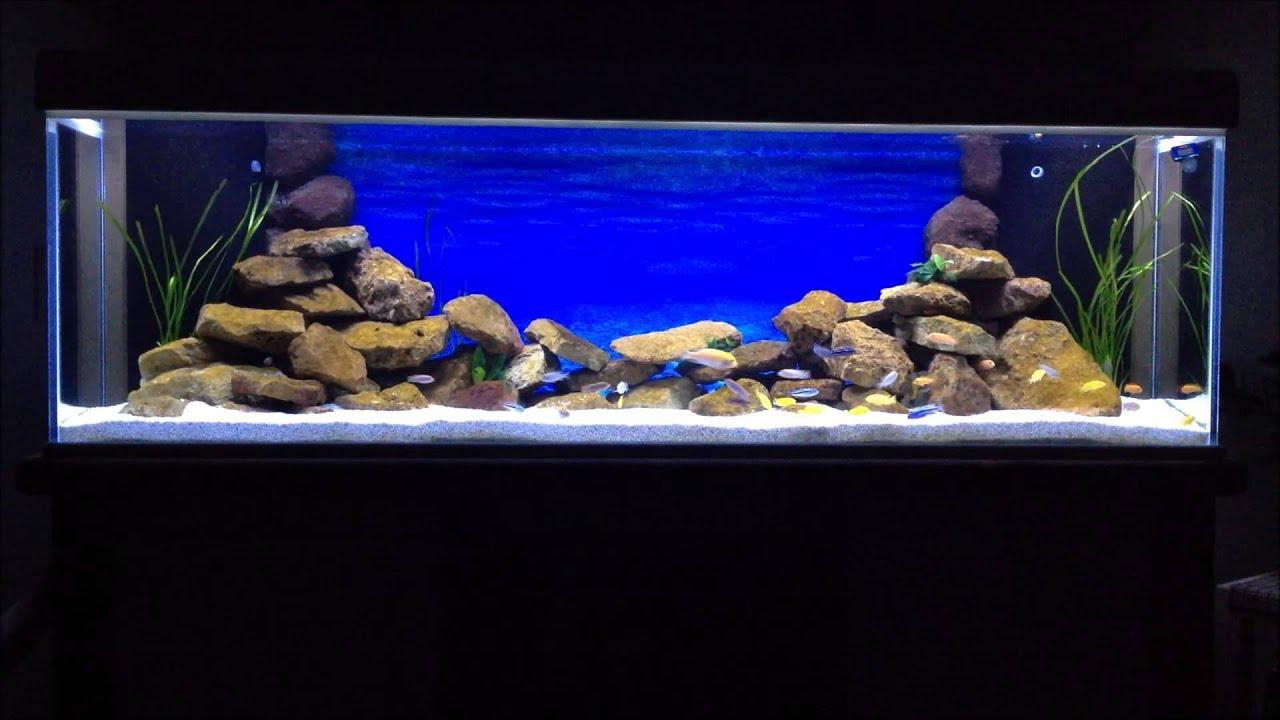 malawi aquarium led mbuna cichliden 720l funnydog tv. Black Bedroom Furniture Sets. Home Design Ideas