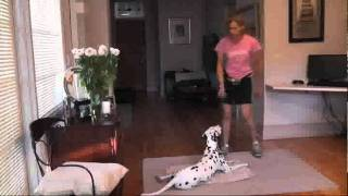 Teaching A Dog To Stay Using Clicker Training