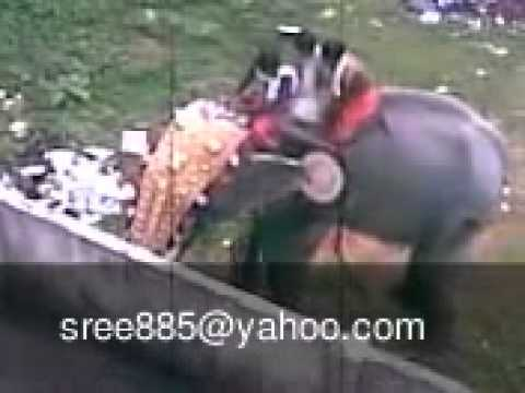 Kerala elephant attack youtube - photo#43