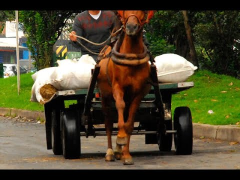 Soacha dice adiós a vehículos de tracción animal | Noticias Caracol