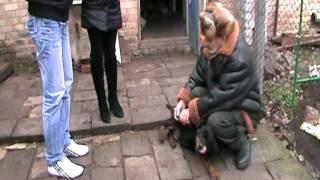 Доставим щенка любой породы в любой город!