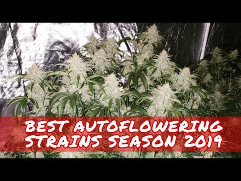 Best Autoflowering Strains Season 2019 Ultimate Autoflower Cannabis Compilation