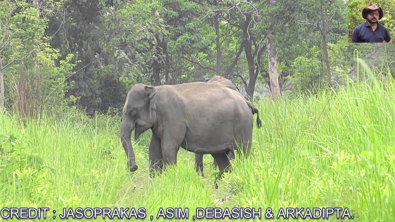 Manas National Park The Wild Beauty( Part - 1 )