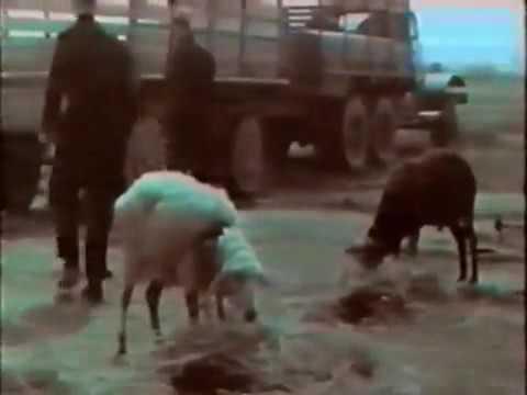 Испытание РДС 37 на Семипалатинском полигоне   YouTube