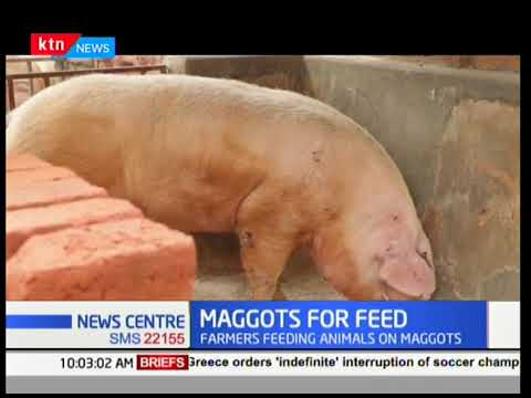KTN News Centre - 13th March 2018: You are encouraged to use maggots for feed
