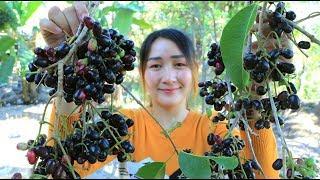 Yummy Black Jamun Shake Chili Salt - Jambolan Plum Harvest From The Tree - Cooking With Sros